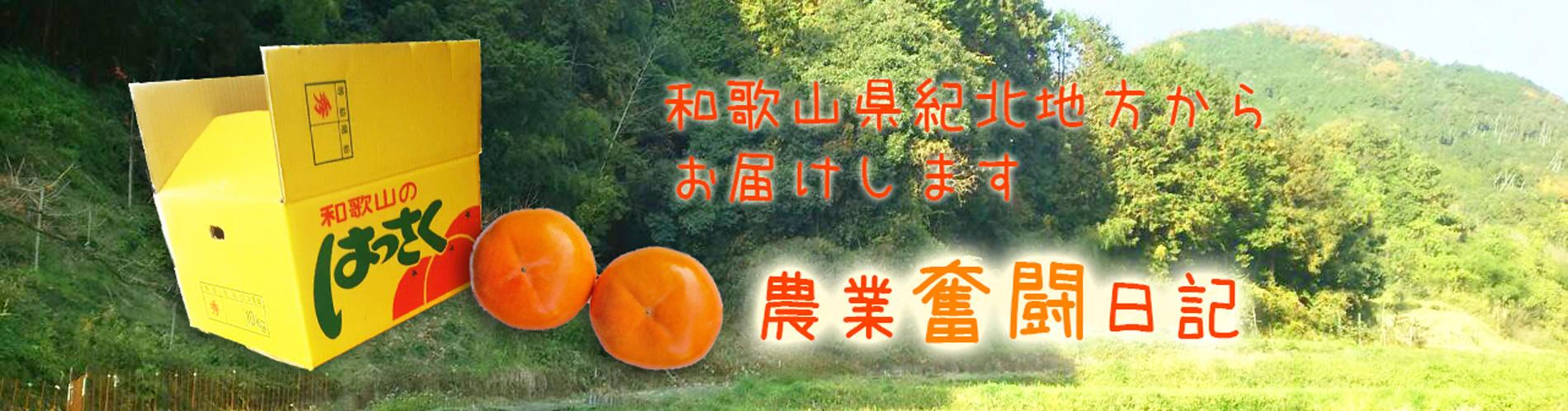 元気和歌山ブログ
